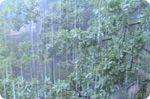 Прогноз погоди для міст Росії 23 по 25 червня
