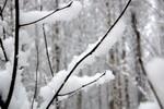 Прогноз погоди в Україні на період з 25 по 27 березня