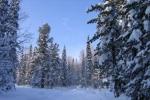 Прогноз погоды  для Белоруссии в период с 12 по 15 февраля