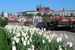 Прогноз погоди в Україні на період з 12 по 14 травня