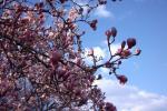 Прогноз погоди в Україні на  період з 16 по 18 травня