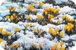 Україна. Прогноз Погоди На 6-8 Березня