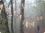 Прогноз Погоди Для України 8-10 Квітня