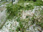 Прогноз погоди для міст Росії 26-28 травня